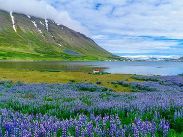 Fly til Isafjordur
