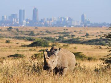 Fly til Nairobi