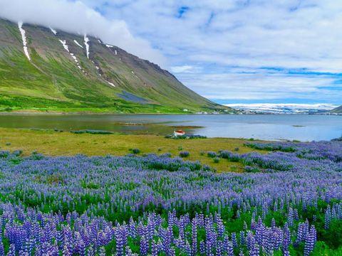 Flybilletter til Isafjordur